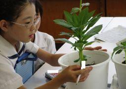 植物の育ちとつくり