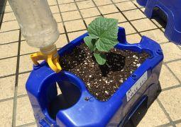 自分だけの野菜の苗を植えたよ!