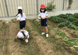 裏庭の畑の整備