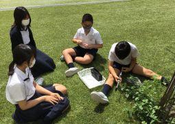 植物と空気
